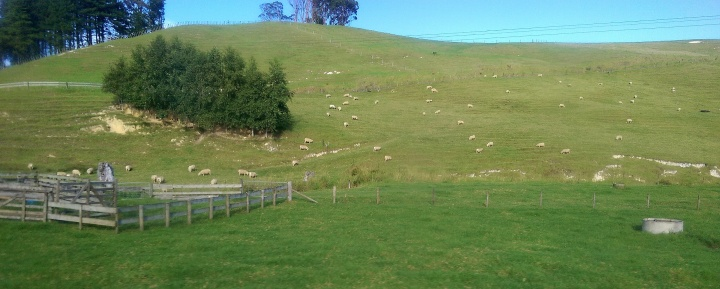 bus ride sheep on a hill