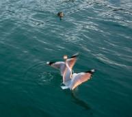 2016 04 11 Sail Nt 13 Anchorage Opunga Cove-101