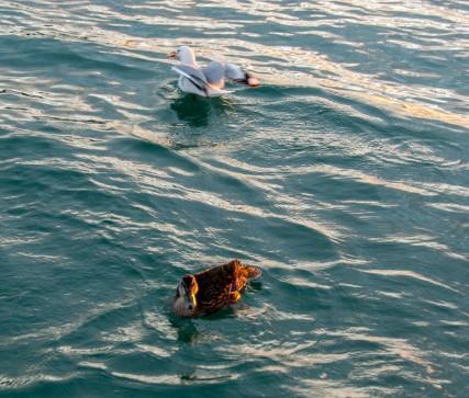 2016 04 11 Sail Nt 13 Anchorage Opunga Cove-112