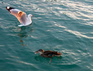 2016 04 11 Sail Nt 13 Anchorage Opunga Cove-114