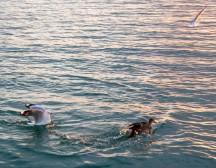 2016 04 11 Sail Nt 13 Anchorage Opunga Cove-121