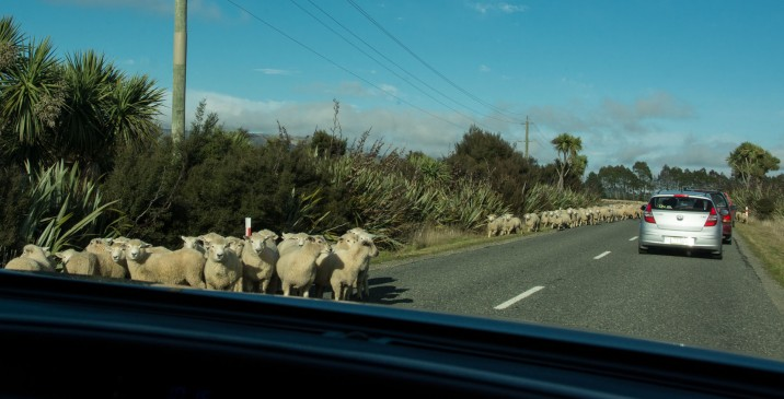2016 04 21 Drive to South Sheep (135)