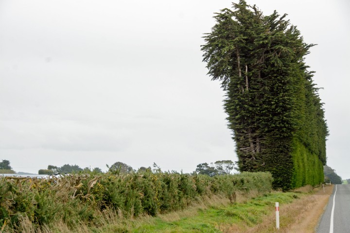 2016 04 23 Drive to Catlins (103)