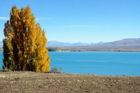 2016 04 26 Lake Tekapo (111)
