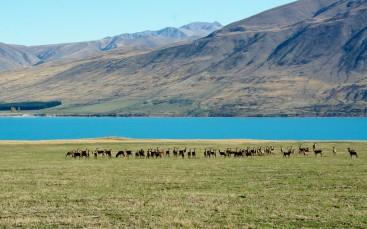 2016 04 26 Lake Tekapo (241)