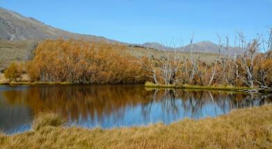 2016 04 26 Lake Tekapo (264)