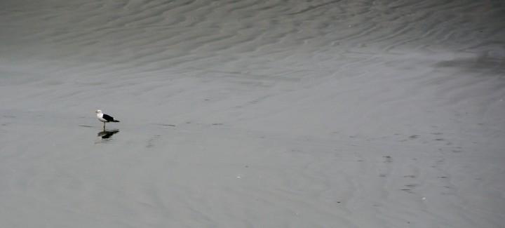 2016 05 01 Cape Foulwind Fur Seals (170)