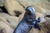 2016 05 02 Abel Tasman Seal Pup Swim (288)