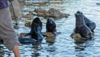 2016 05 02 Abel Tasman Seal Pup Swim (309)-2