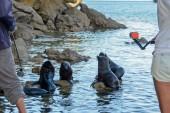2016 05 02 Abel Tasman Seal Pup Swim (309)