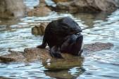 2016 05 02 Abel Tasman Seal Pup Swim (340)
