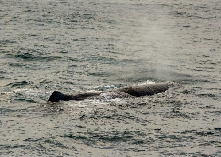 2016 05 05 Kaikoura Whales-184