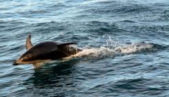2016 05 05 Kaikoura Whales-333