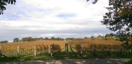 nelson vineyard2