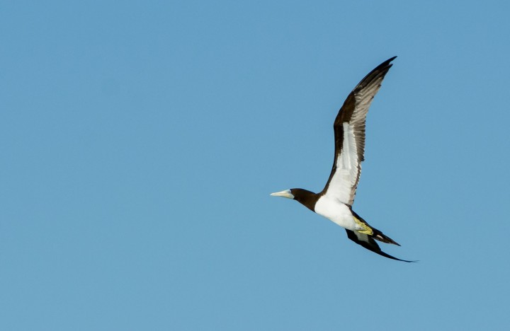 2016 05 15 FP Cruise - Fakarava Bird Island Passage (154)