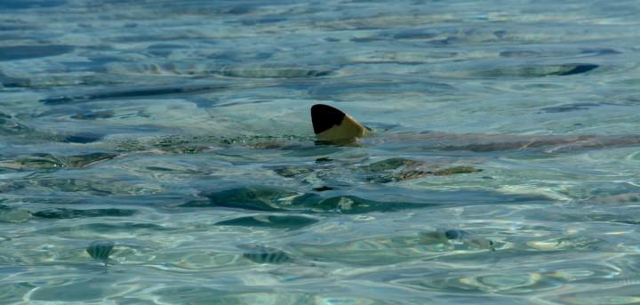 2016 05 15 FP Cruise - Fakarava Blue Lagoon (296)