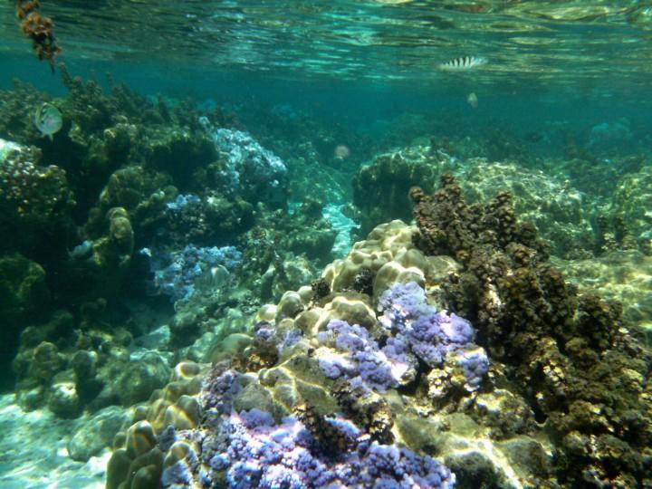 2016 05 18 FP Cruise - Tahaa Drift Snorkle (121)