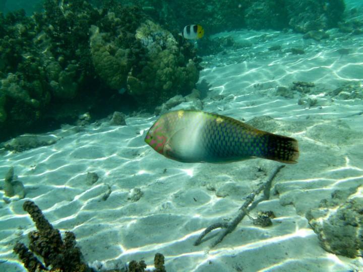 2016 05 18 FP Cruise - Tahaa Drift Snorkle (124)
