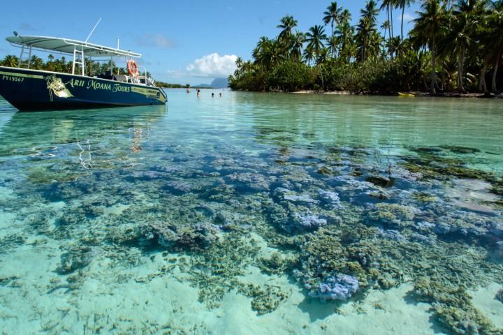 2016 05 18 FP Cruise - Tahaa Drift Snorkle Tour (136)