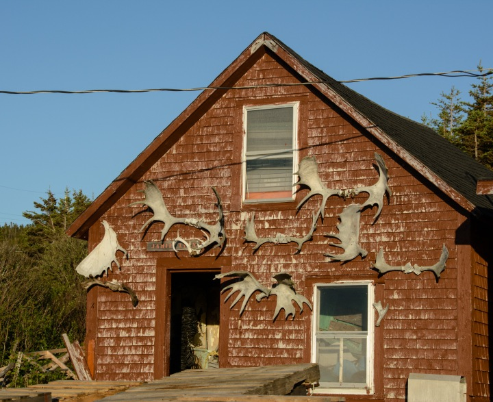dingwall-nova-scotia-moose-antlers