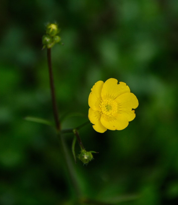yellow-flower-single