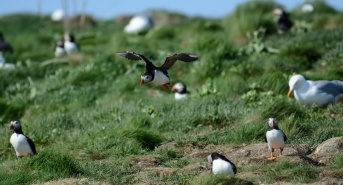 puffins-and-root-cellars-10-of-32