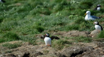 puffins-and-root-cellars-11-of-32