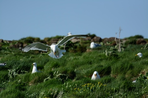 puffins-and-root-cellars-16-of-32