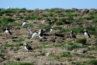 puffins-and-root-cellars-26-of-32