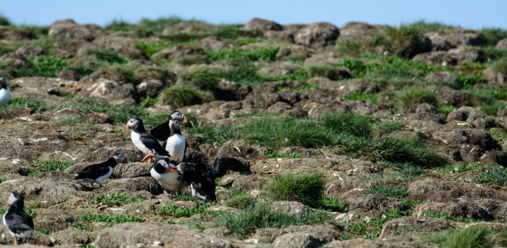 puffins-and-root-cellars-27-of-32
