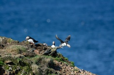 puffins-and-root-cellars-28-of-32