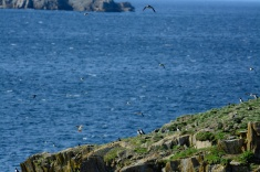 puffins-and-root-cellars-30-of-32