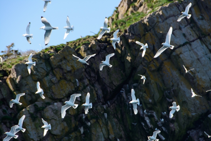 white-birds