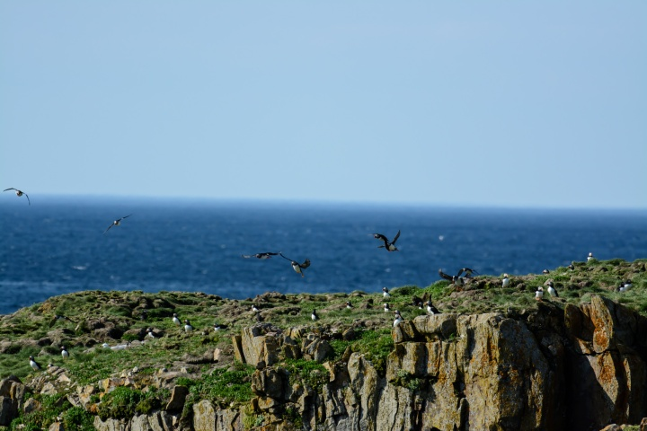 puffin-viewing-1-of-1