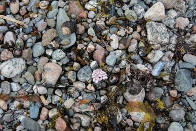 newfoundland-fjords-2353