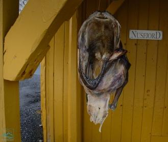 Norway 2017 Nusfjord fishing village-156