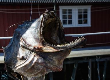 Norway 2017 Nusfjord fishing village-163